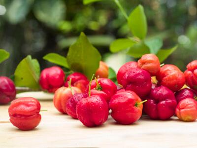 Экстракт барбадосской вишни (Ацерола)