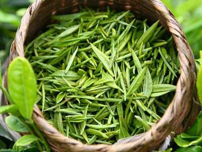 Экстракт зеленого чая (камелии китайской)